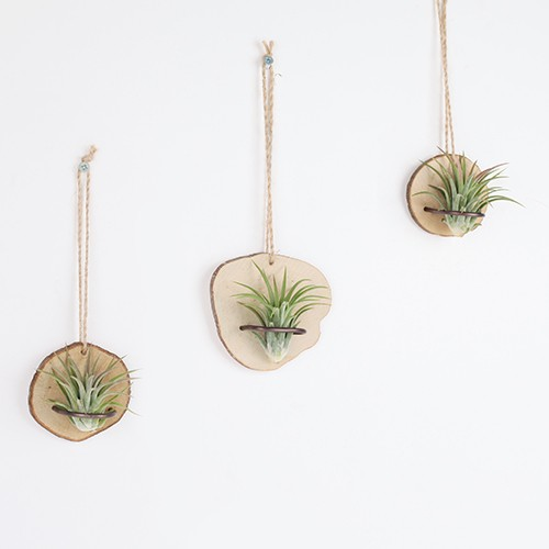 Wood Wall Ionantha